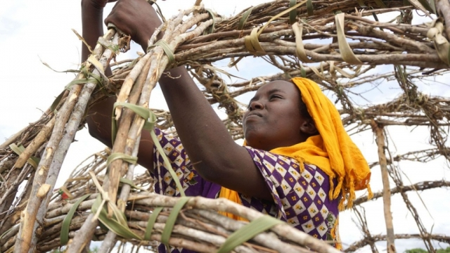 A woman weaves together branches and grasses to build a structure.